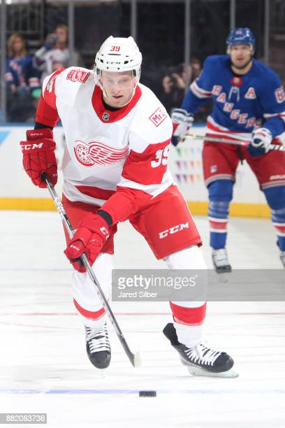 Anthony Mantha of the Detroit Red Wings skates with the puck against the New York Rangers at Madison Square Garden on November 24 2017 in New York...