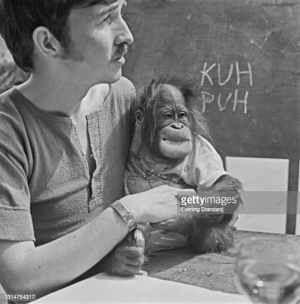 Anthropologist and film-maker Keith Laidler raises baby orang-utan Cody as a human child at Flamingo Park Zoo in Yorkshire, UK, 6th August 1974....