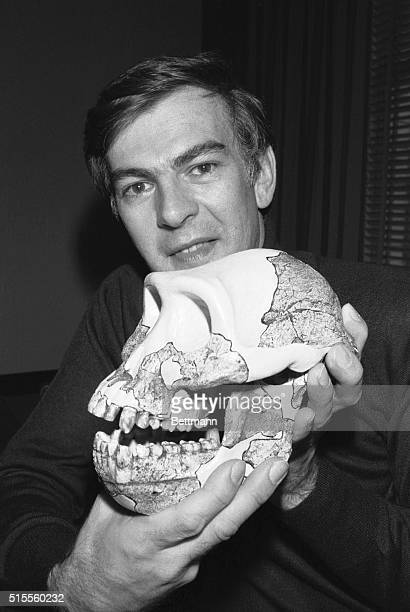 Anthropologist Donald Johanson discoverer of the oldest fossil bones of erect walking humans on record displays a plastercast skull of a female...