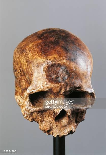 Anthropology CroMagnon type skull of Homo sapiens sapiens