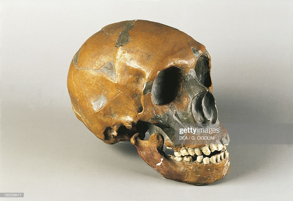 Neanderthal man skull (Homo Sapiens Neanderthalensis), from Le Moustier, France : News Photo