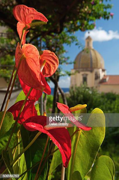 Anthurium flowers and Santa Maria Assunta Church