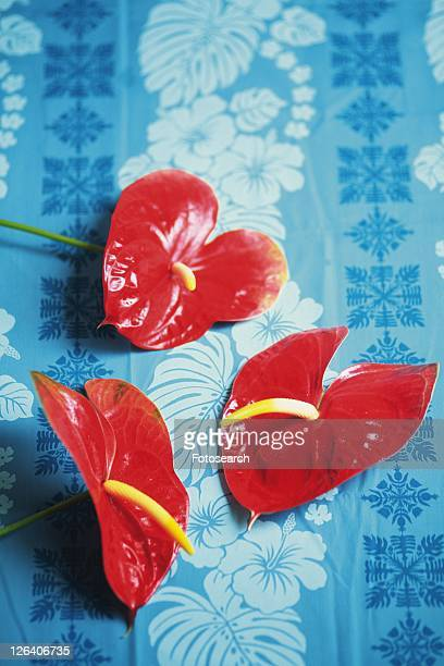 Anthurium Flowers on Patterned Blue Cloth, Differential Focus
