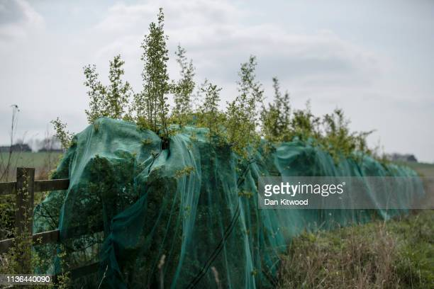 Anti Bird' netting covers a hedgerow on April 9, 2019 in Lichfield, England. A public backlash against property developers has swept across the...
