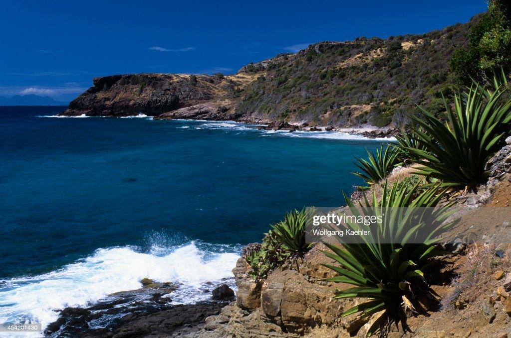Antigua, Coastline With Century Plants In Foreground.