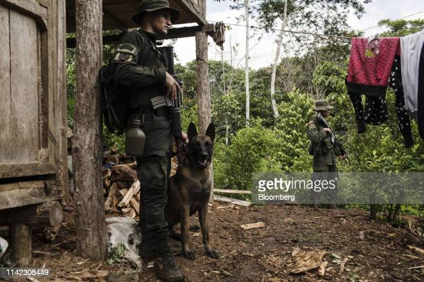 AntiNarcotics police officers stand guard with a police dog outside a building during an operation in Tumaco Narino department Colombia on Tuesday...