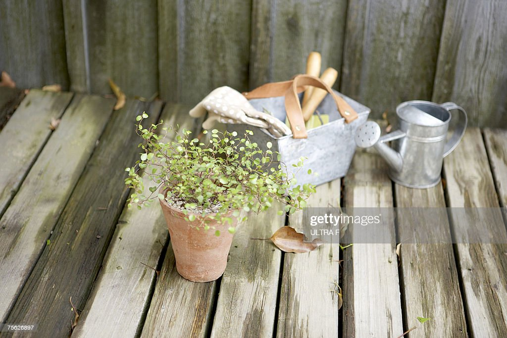 Antique Gardening Tools And Potted Plant On Damp Wooden Deck : Stock Photo