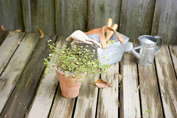 Antique gardening tools and potted plant on damp wooden deck