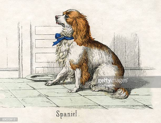 Antique print of a spaniel from the illustrated book The Natural History of Animals 1859