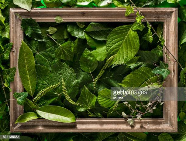 Antique wood picture frame on fresh green leaves background