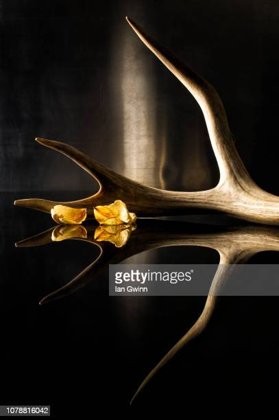 antler and petals - ian gwinn stock pictures, royalty-free photos & images