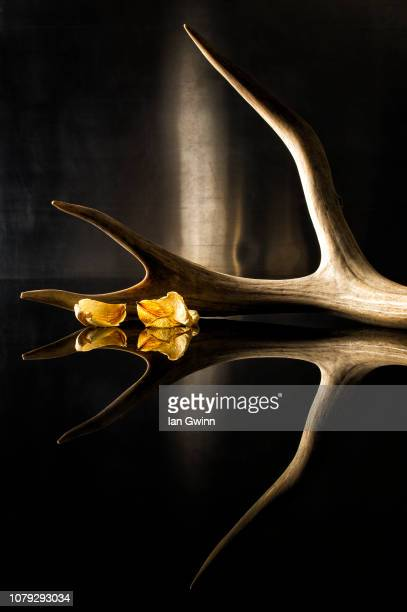 antler and petals_1 - ian gwinn stock pictures, royalty-free photos & images