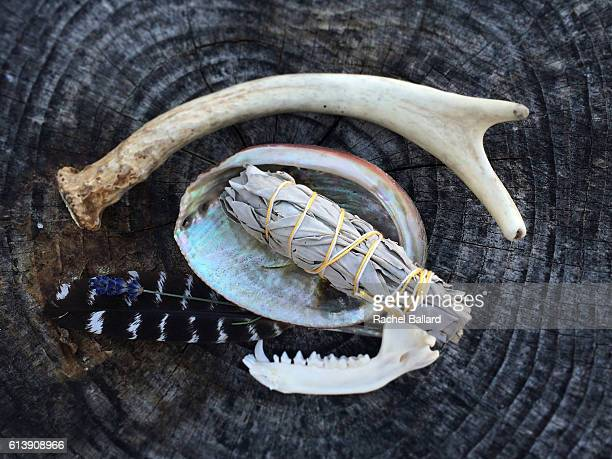 antler and sage - ceremony stock pictures, royalty-free photos & images