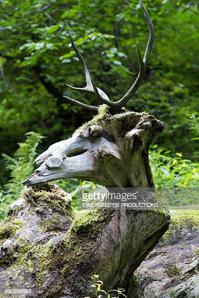Antler on a tree bole