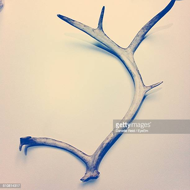 Antler over white background