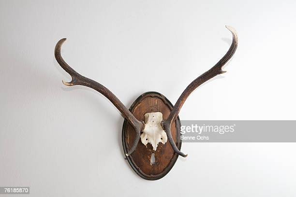Antlers on the wall