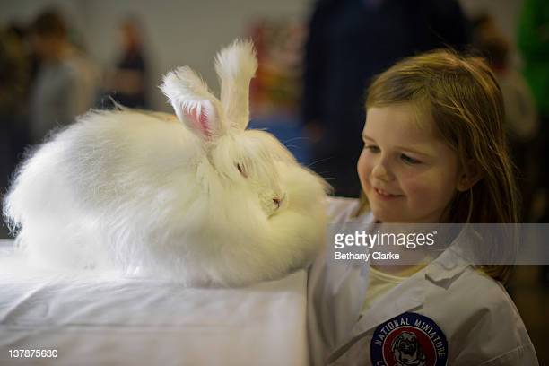 Antonia Galloway7 with Emeranthus a 4 month old Angora rabbit who won best fancy in the under 5s show on January 28 2012 in Harrogate England...