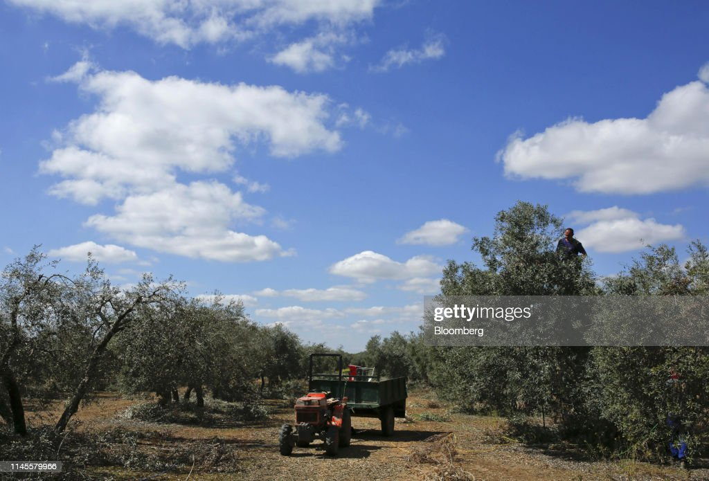 ESP: Trump's Tariffs Send Shock Waves Through Spain's Olive Groves