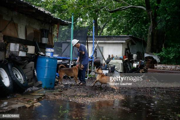 Antonio Garcia struggles to corral his dogs as he prepares to load them into his truck and evacuate his home on the banks of the rising Brazos River