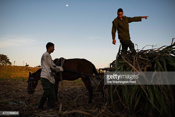 Antonio Gonzalez left and Orlando Hernandez load sugarcane onto their horse pulled wagon in a cane field in Camilo Cienfuegos which was once the town...