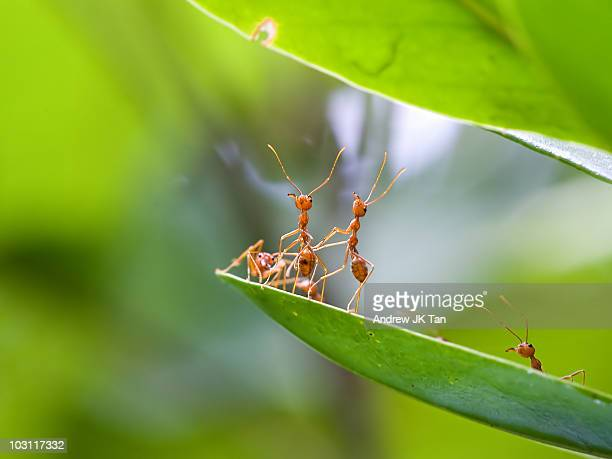 ants actions - ants stock pictures, royalty-free photos & images