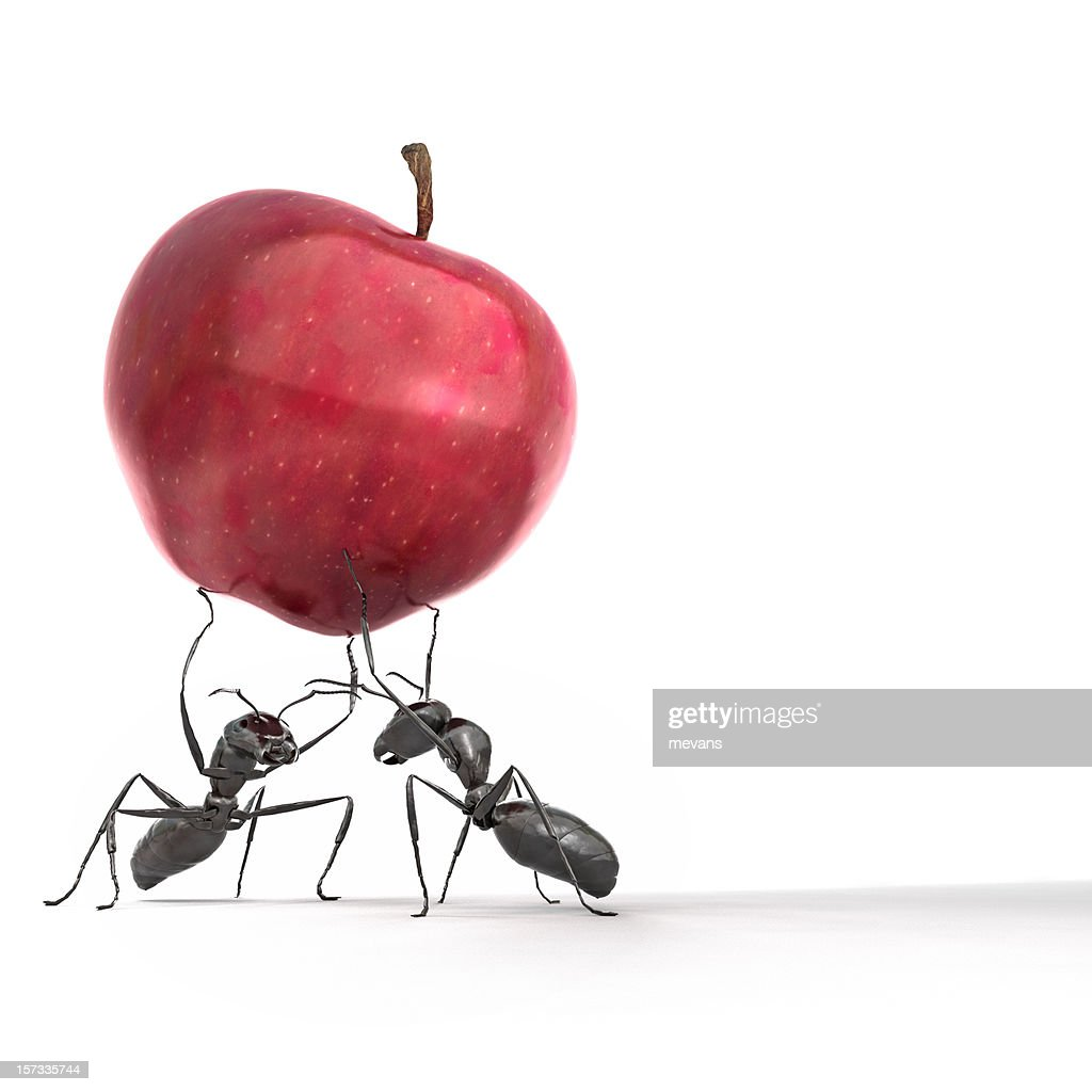 Ant Stock Photos and Pictures Getty Images