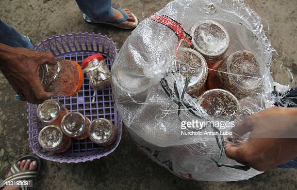 Ants enter in jars are placed in a plastic bag for sale on April 5 2014 in Bogor Indonesia Breeders can produce 300 pounds of eggs and hundreds of...