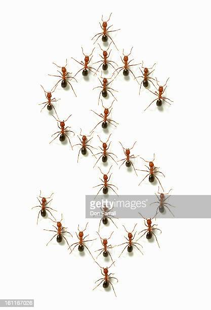 Ants forming a dollar sign