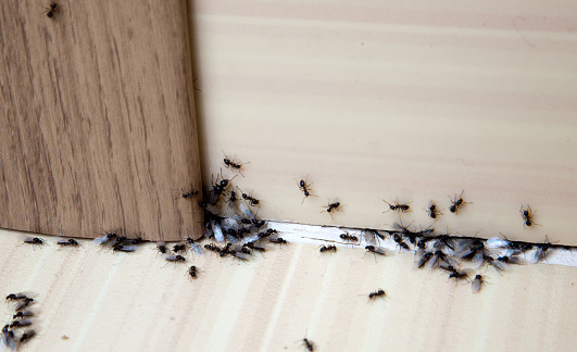 Ants in the house 940184998