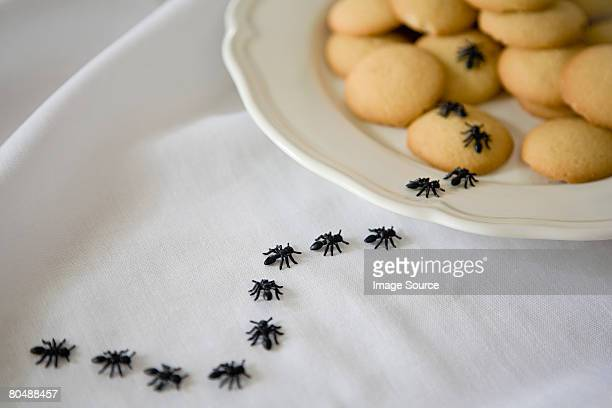 ants on biscuits - ants stock pictures, royalty-free photos & images
