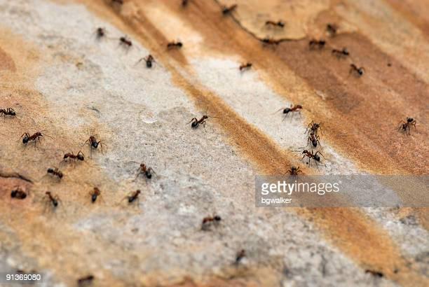 Ameisen auf Bürgersteig