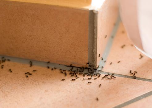 Ants plague 483752442