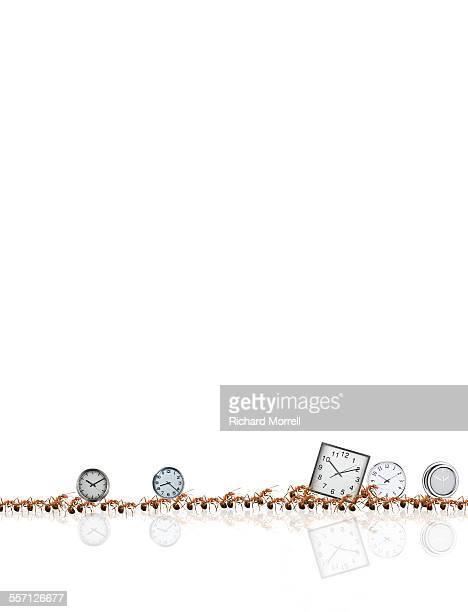 Ants Stealing Alarm Clocks