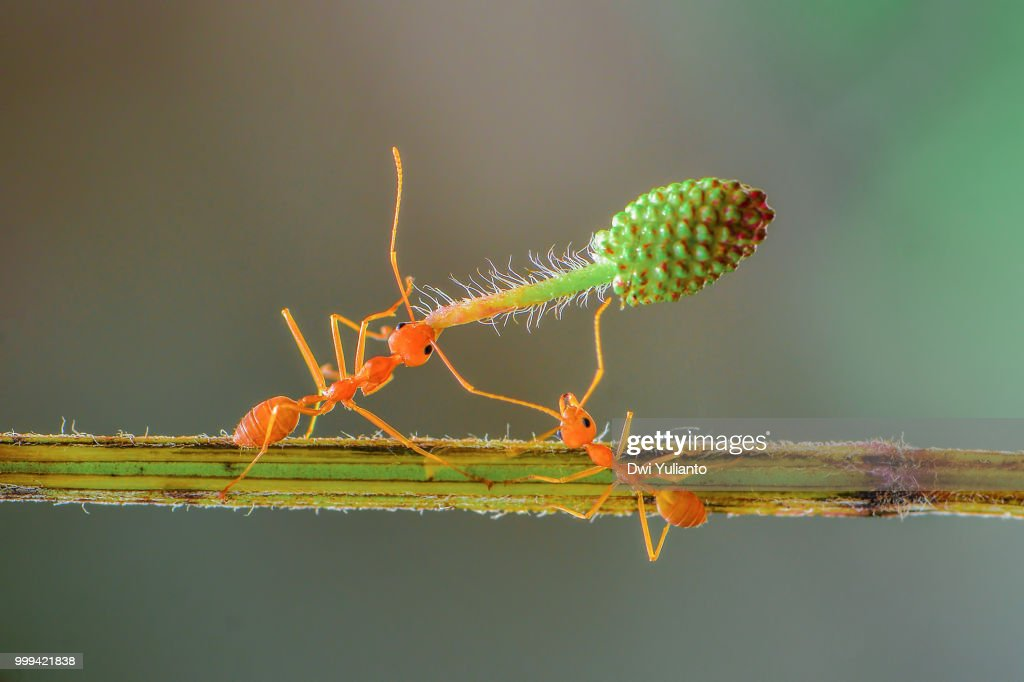 Ants Working Stock Photo Getty Images