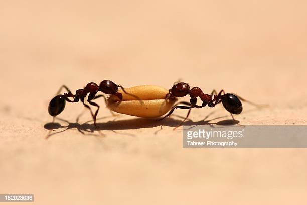 Ants working togeather