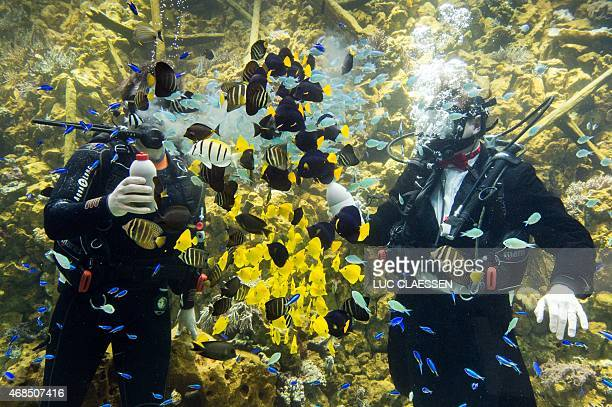 Antwerp Mayor Bart De Wever and Antwerp director of the Zoo Dries Herpoelaert feed fishes on Friday 3, 2015 in the Antwerp zoo during the opening of...