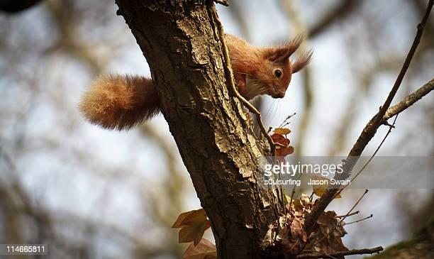 anyone seen my nuts - s0ulsurfing - fotografias e filmes do acervo