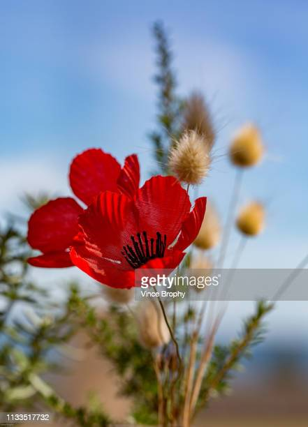 anzacs and poppies - anzac soldier stock pictures, royalty-free photos & images