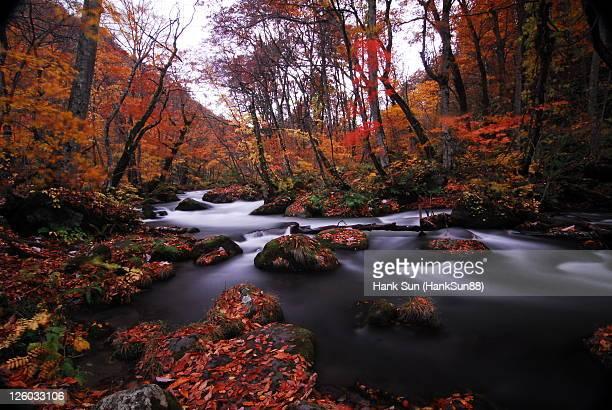 Aomori Oirase river maple forest