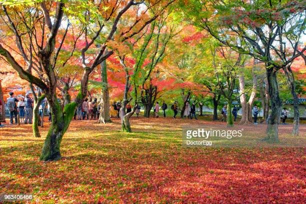 apanese people and Tourists enjoy sightseeing colourful maple tree at Tofukuji Temple