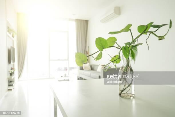 apartment indoors - インテリア ストックフォトと画像