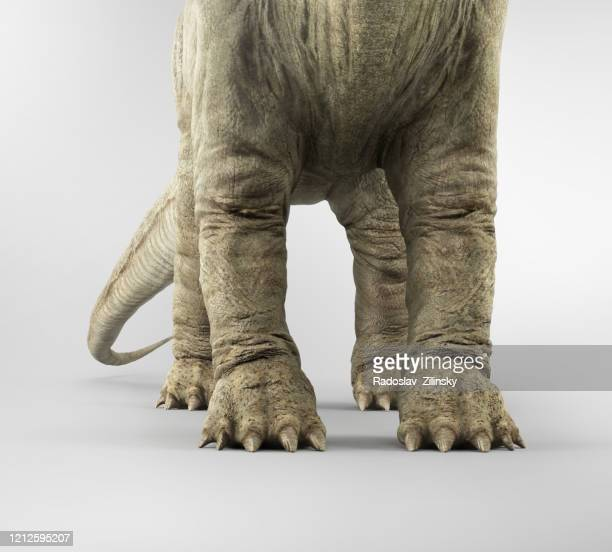 apatosaur dinosaur - sauropoda stock pictures, royalty-free photos & images