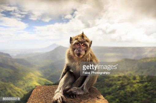 A Ape Sitting On A Stone