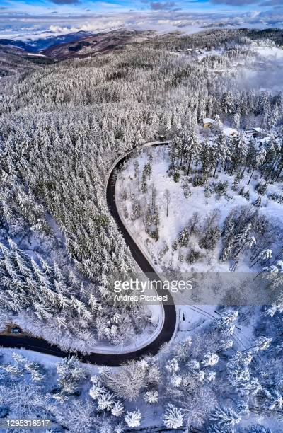 apennines in winter, tuscany, italy - treetop stock pictures, royalty-free photos & images