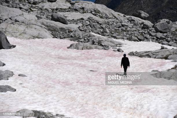 Apicture taken on July 4, 2020 at the Presena glacier near Pellizzano, shows a man walking on pink colored snow, supposedly due to the presence of...