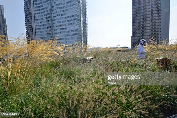 honey produced in Paris First honey harvest on the roof of the Beaugrenelle shopping mall The honey will be sold in favour of Institut Curie Siw...
