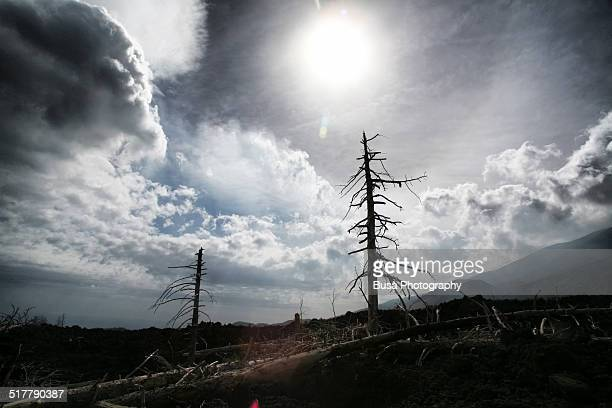 apocalyptic natural landscape of burnt trees - nuclear fallout stock pictures, royalty-free photos & images