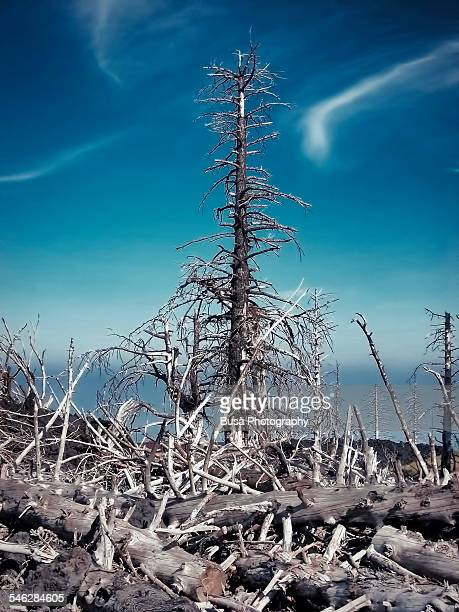 Apocalyptic natural landscape
