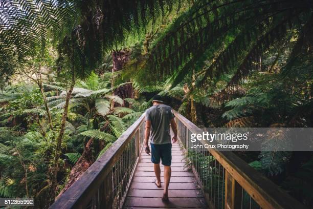 apollo bay forrest - melbourne australia stock photos and pictures