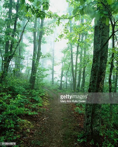 Appalachian Trail Through Forest